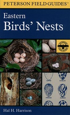 Eastern Birds Nests