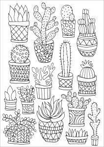 peter pauper press intricate succulents artists coloring book 1435 - Intricate Coloring Books