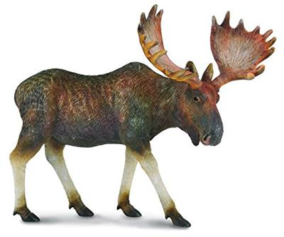 This true to life, scaled-down Moose is perfect for use in dioramas, pretend habitat scenes, or other displays. This detailed figurine measures 12.5cm X 6.7cm. The male moose will drop its antlers after the mating season and conserve energy for the winter
