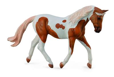 trotting or jogging paint horse