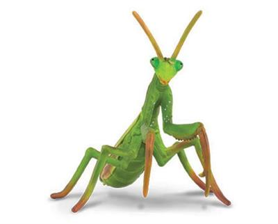 "Breyer Horses CollectA Praying Mantis #88351 From Collect A's Little Wonders Spider Collection  Mantises are an order of insects that contain over 2,400 species. The largest family is the Mantidae (""mantids""). Mantises have triangular heads with bulging e"