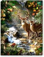 A fall 4 point buck stands along side his doe, in front of a mountain creek, with fall foliage and leaves.