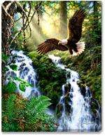 A majestic American Bald Eagle soars above a sunlight mountain or hillside waterfall and creek. Ferns, moss, and evergreens add a brilliant green backdrop to the eagle.